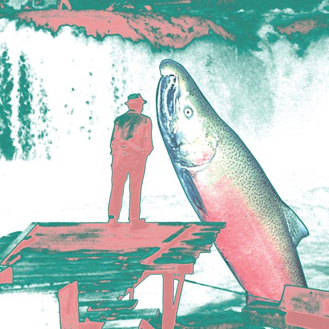 10-Illustration_Salmon-1